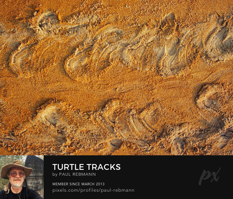 View online purchase options for Turtle Tracks by Paul Rebmann