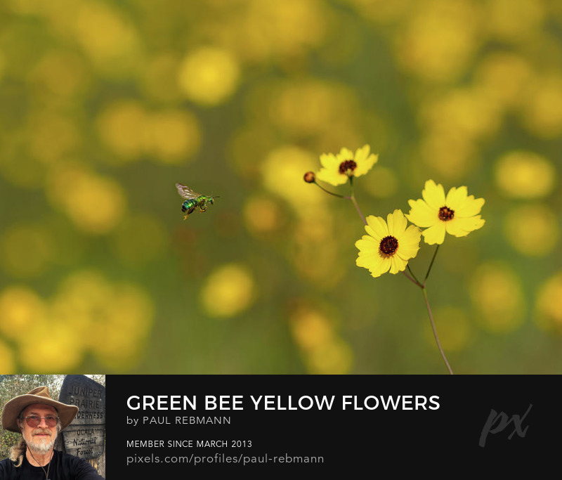 View online purchase options for Green Bee Yellow Flowers by Paul Rebmann
