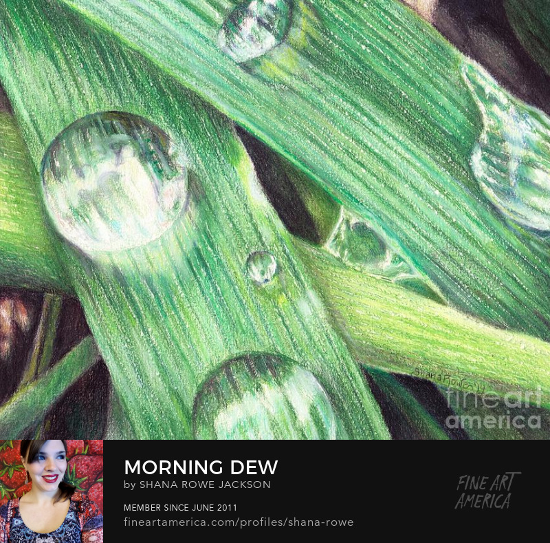 Dew Morning Grass Macro Realism