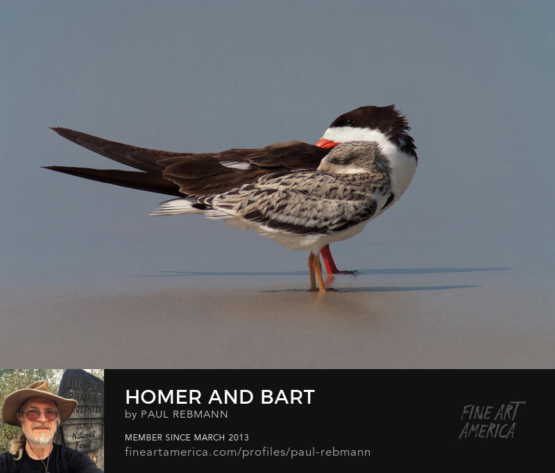 View online purchase options for  Homer and Bart by Paul Rebmann