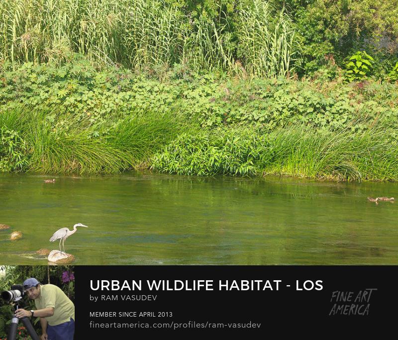 Los Angeles River Wildlife Habitat Fine Art by Ram Vasudev