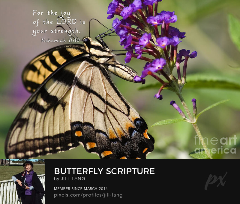 Butterfly on Scripture