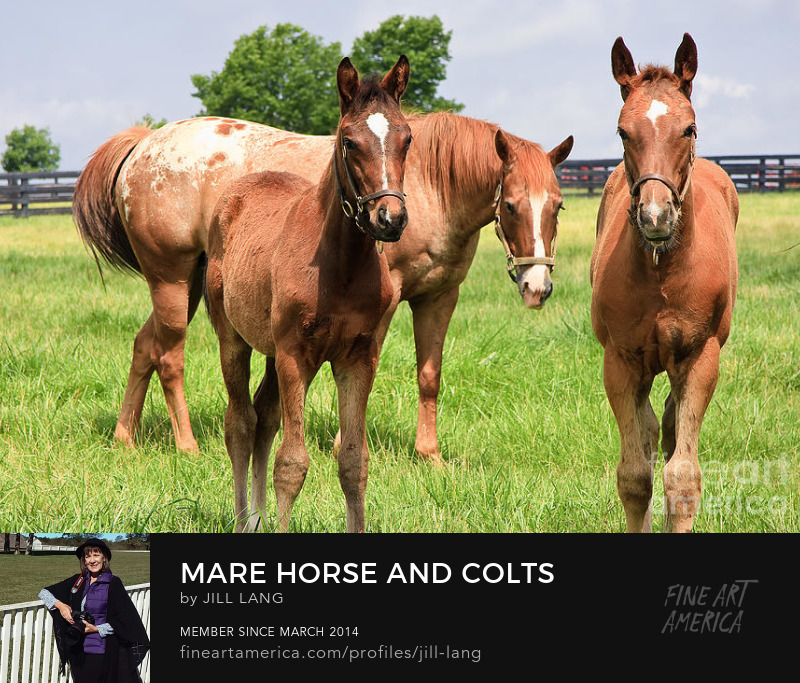 Mare horse and colts