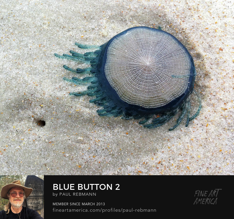 View online purchase options for Blue Button #2 by Paul Rebmann