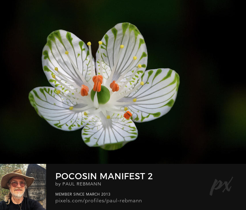 View online purchase options for Pocosin Manifest #2 by Paul Rebmann