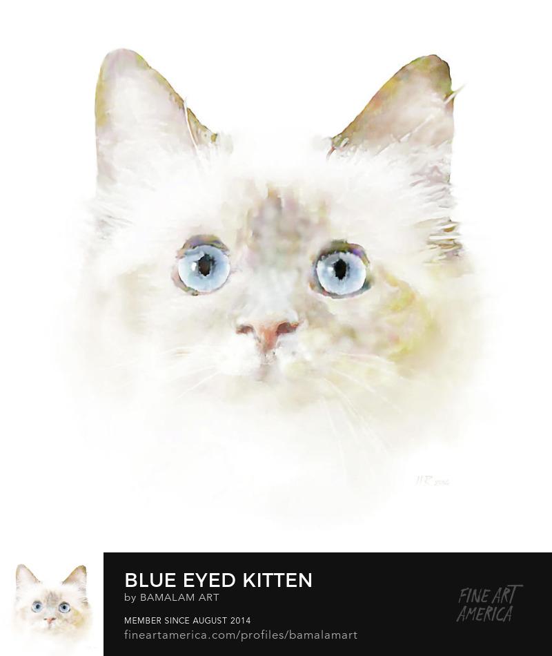 Blue eyed kitten by Bamalam Photography