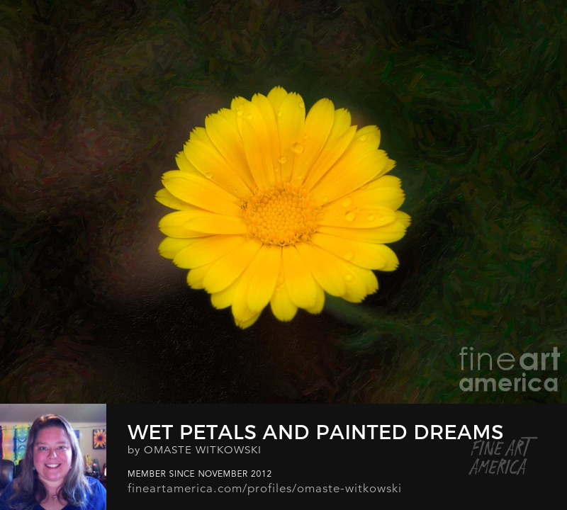 Wet Petals And Painted Dreams Garden Photography Prints