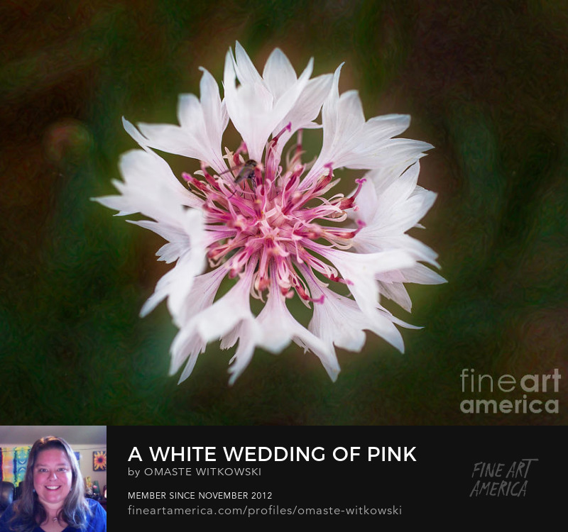 A White Wedding Of Pink And Beauty Garden Photography