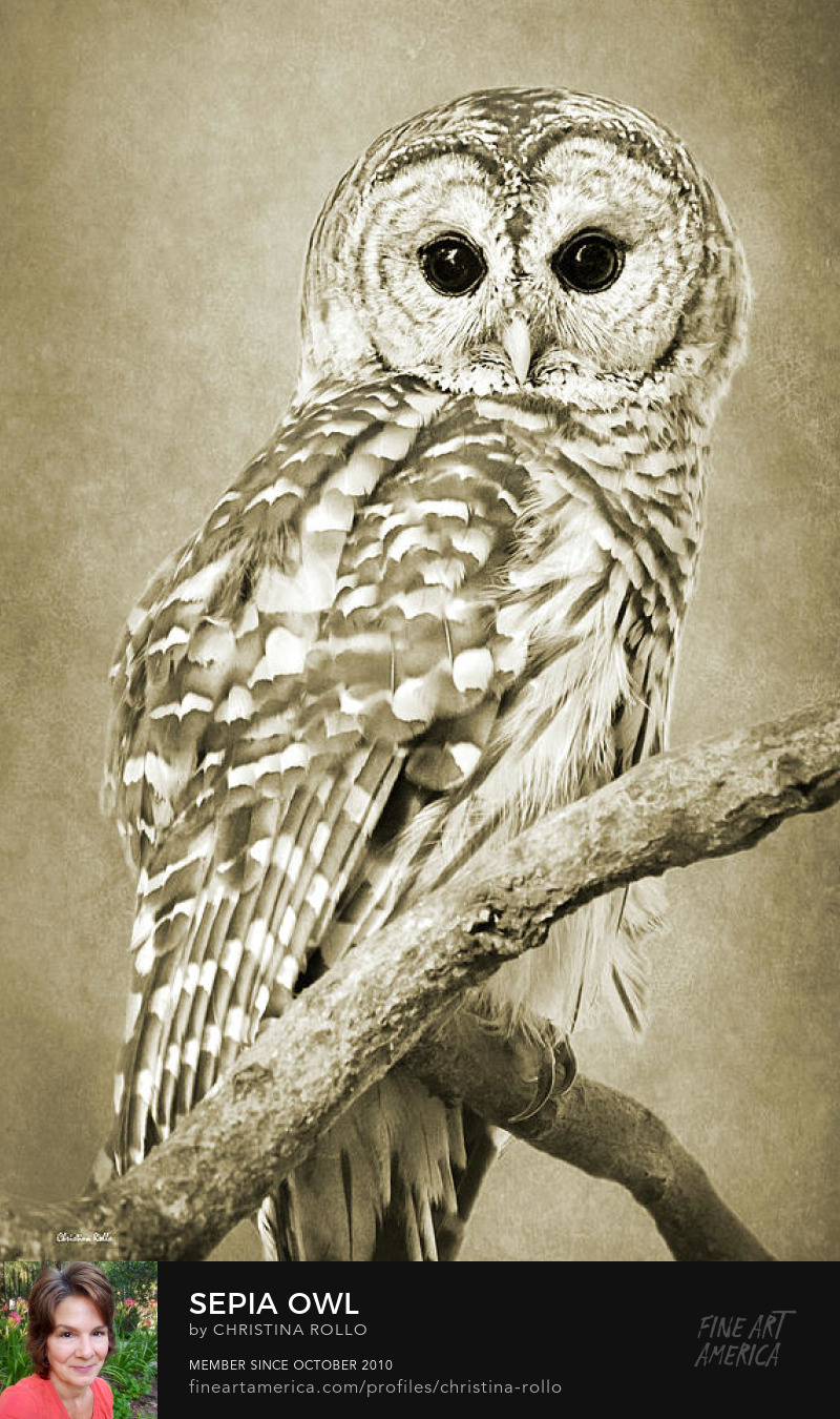 Sepia Owl Art Prints for Sale