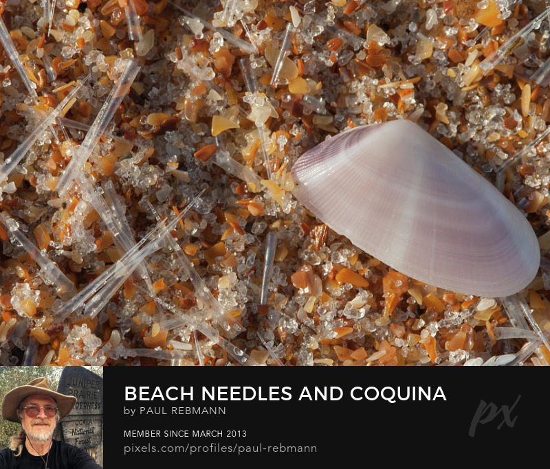 View online purchase options for Beach Needles and Coquina by Paul Rebmann