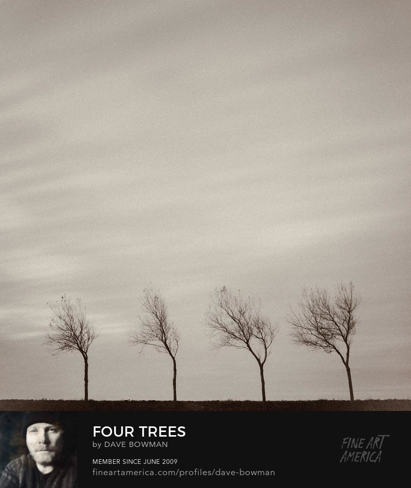 Four Trees by Dave Bowman