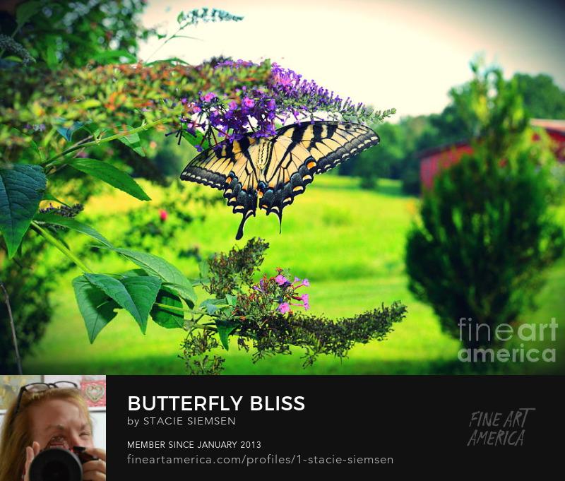 yellow butterfly feeding on purple flower