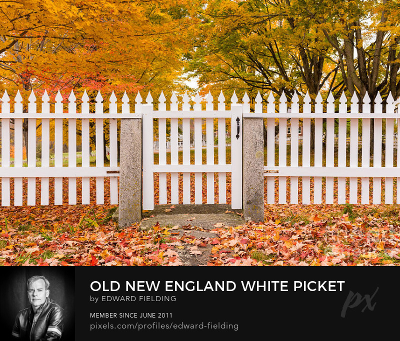 New England fall foliage Photography Prints