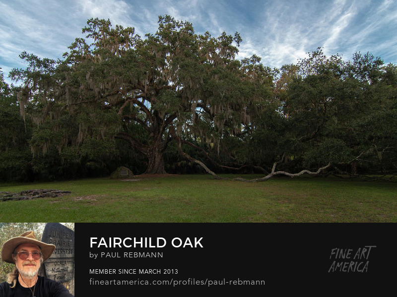 View online purchase options for Fairchild Oak by Paul Rebmann