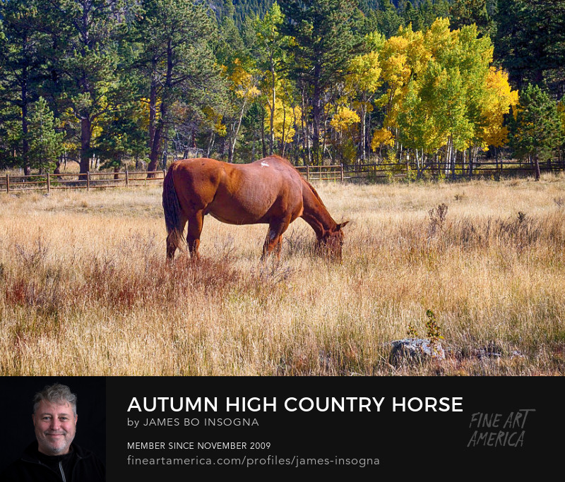 Colorado High Country Horse Grazing Art Prints Online