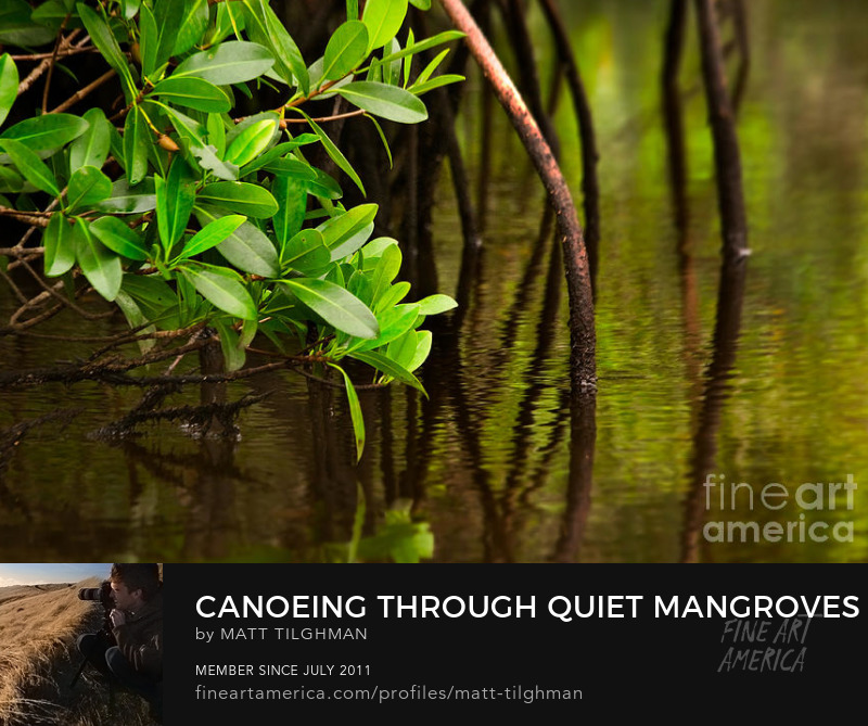 Mangrove Art Prints