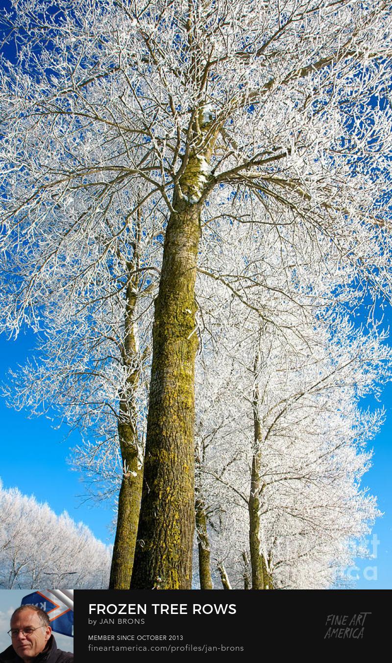 Frozen tree rows - Art Prints