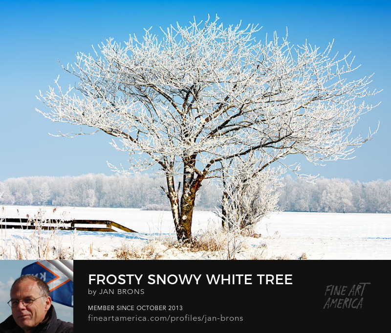 Frosty snowy white tree - Photography Prints