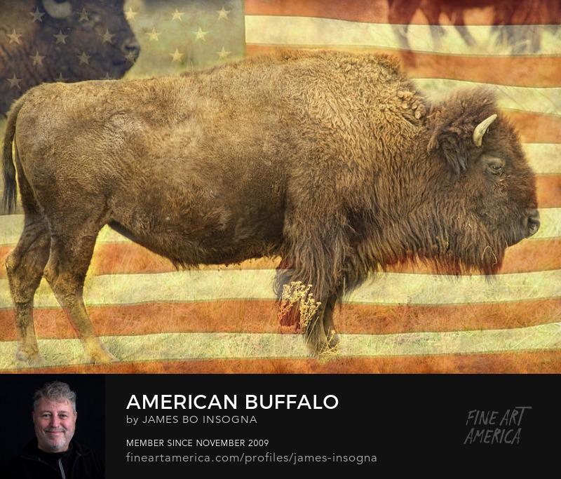 American Buffalo Art Prints For Sale