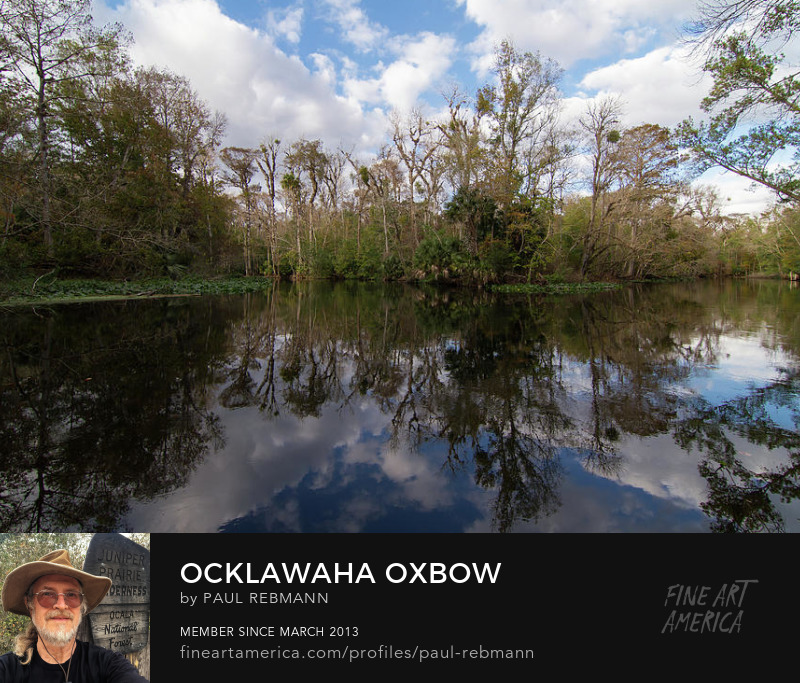 Purchase Ocklawaha Oxbow by Paul Rebmann