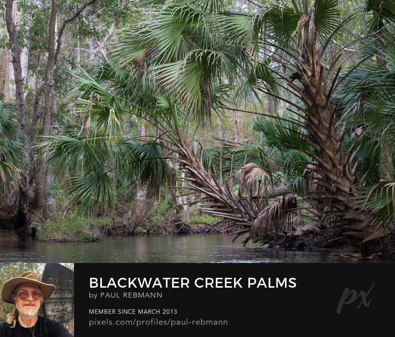 View online purchase options for Blackwater Creek Palms by Paul Rebmann