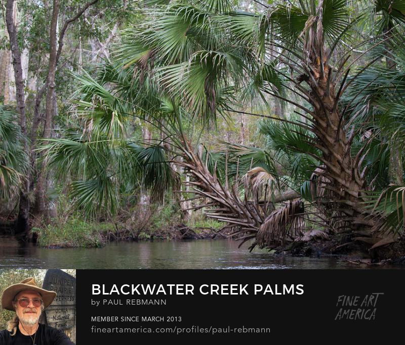 Purchase Blackwater Creek Palms by Paul Rebmann