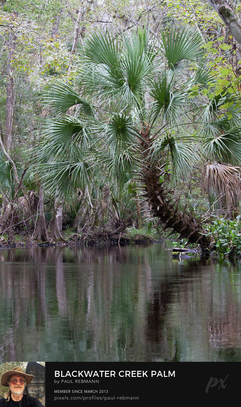View online purchase options for Blackwater Creek Palm by Paul Rebmann