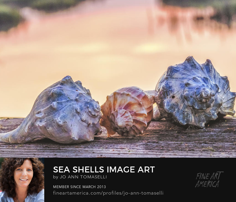 Buy Nature Seashell Photography Prints Online