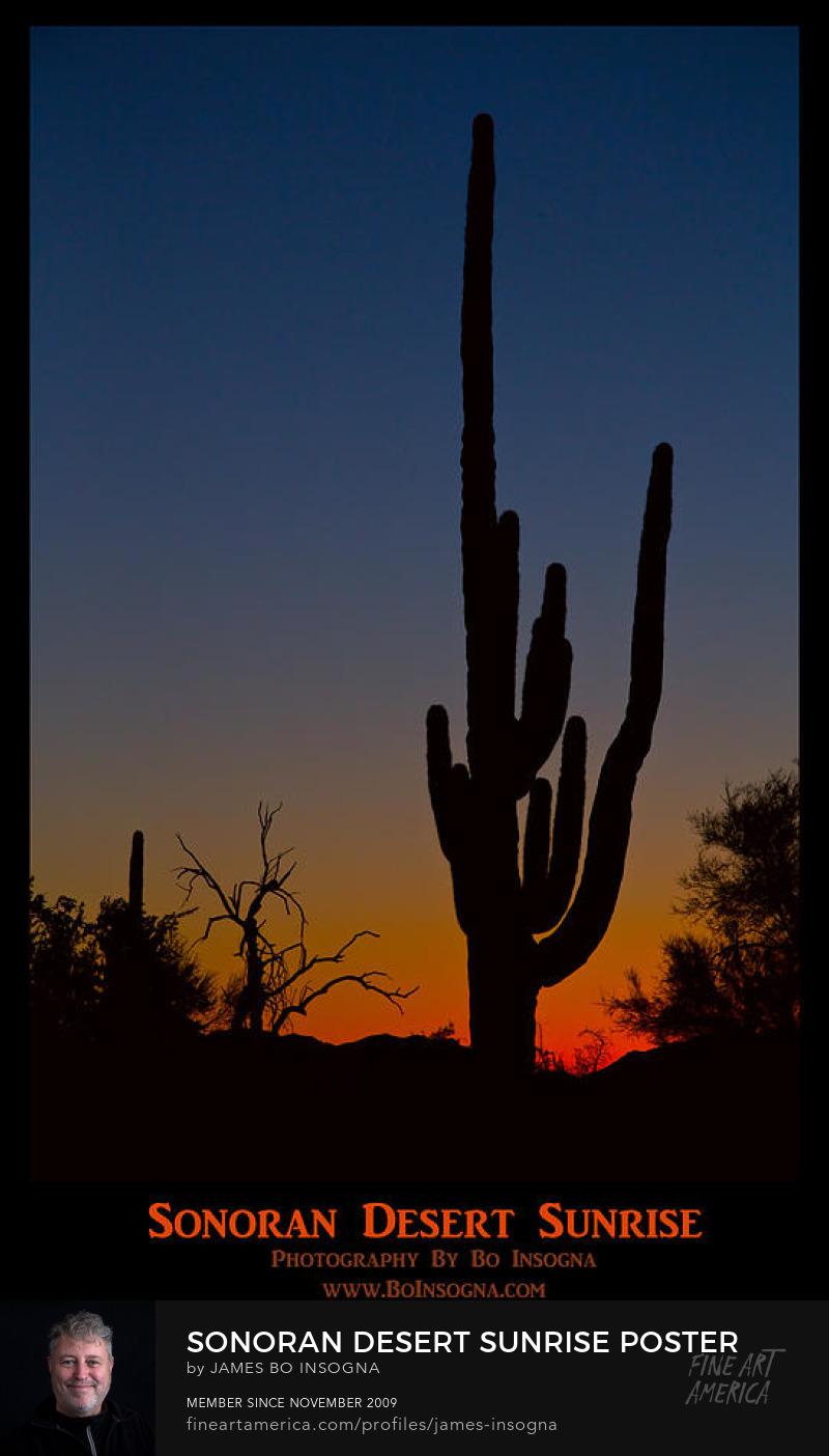 Sonoran Desert Sunrise Poster Print