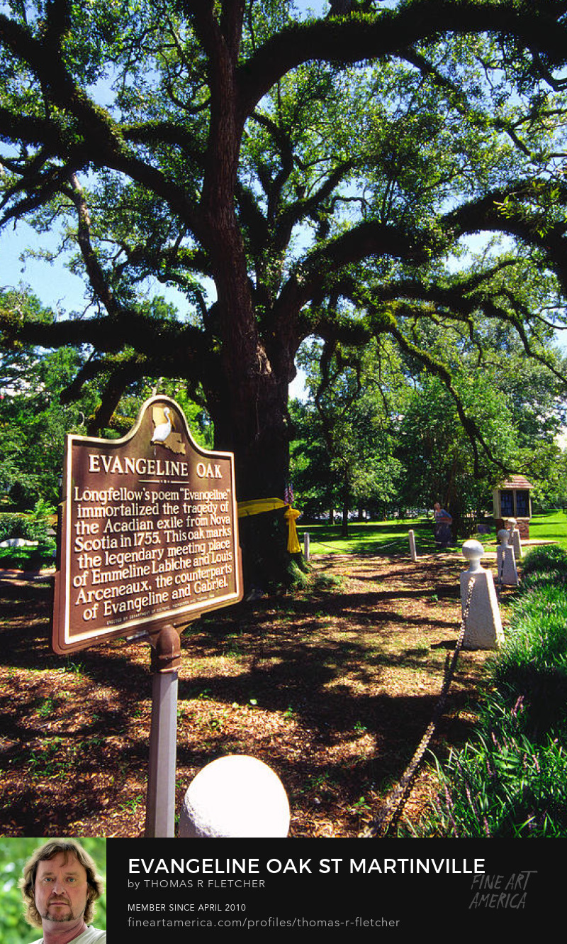 Evangeline Oak St Martiinville Photography Prints