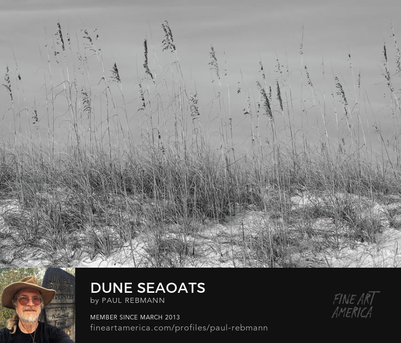 View online purchase options for Dune Seaoats by Paul Rebmann