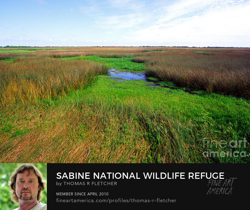 Art Prints Sabine National Wildlife Refuge
