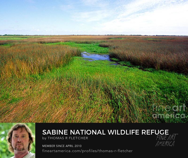 Art Prints Sabine National Wildlife Refuge