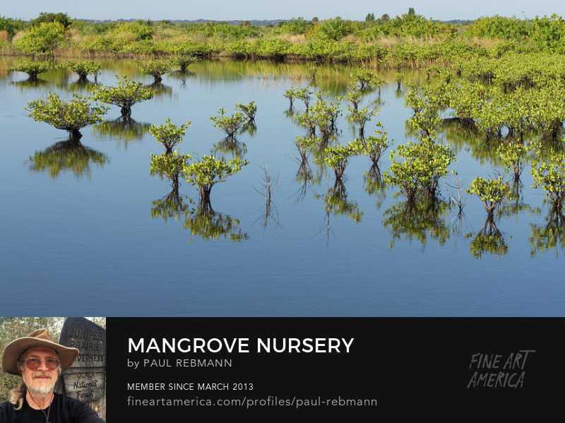 View online purchase options for Mangrove Nursery by Paul Rebmann