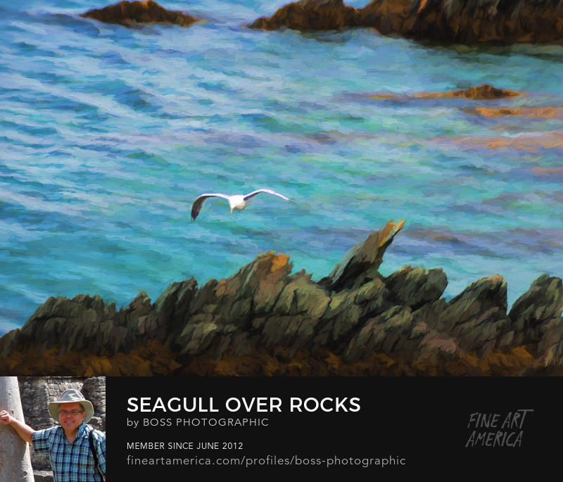 Seagull Over Rocks