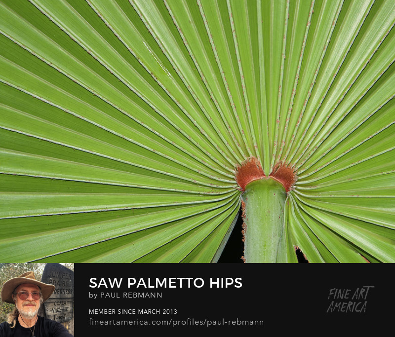 View online purchase options for Saw Palmetto Hips by Paul Rebmann