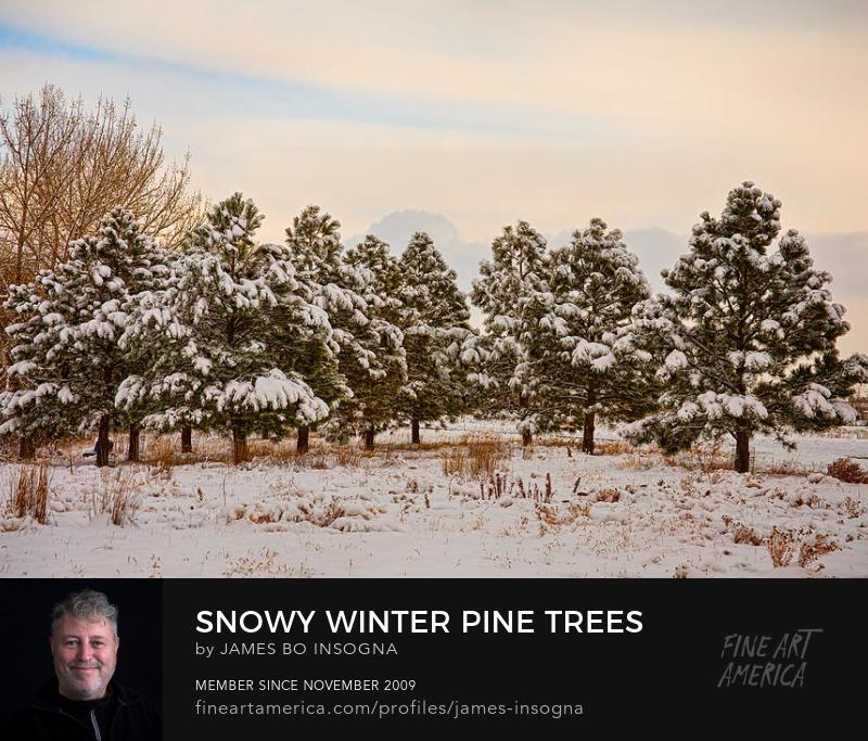 Snowy Winter Pine Trees Landscape