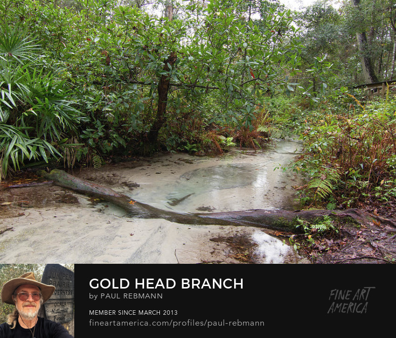 View online purchase options for Gold Head Branch by Paul Rebmann