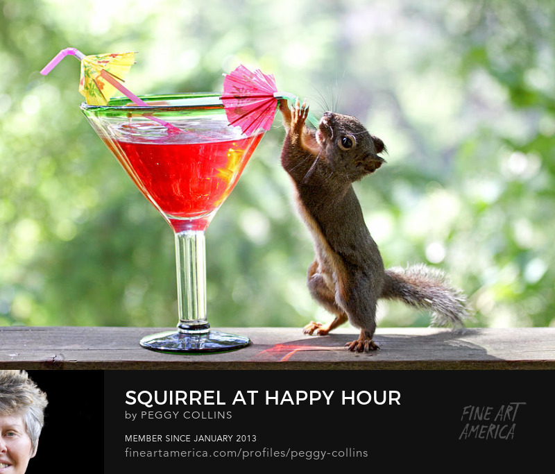 new year, squirrel, drinking, cocktails