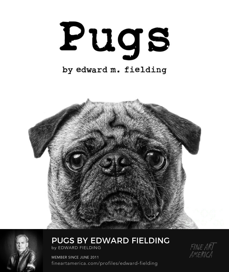 pug dog book Photography Prints