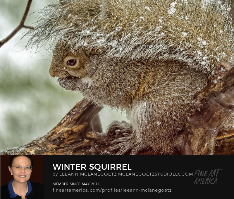 McLaneGoetzStudioLLC.com Winter Squirrel Washington Michigan
