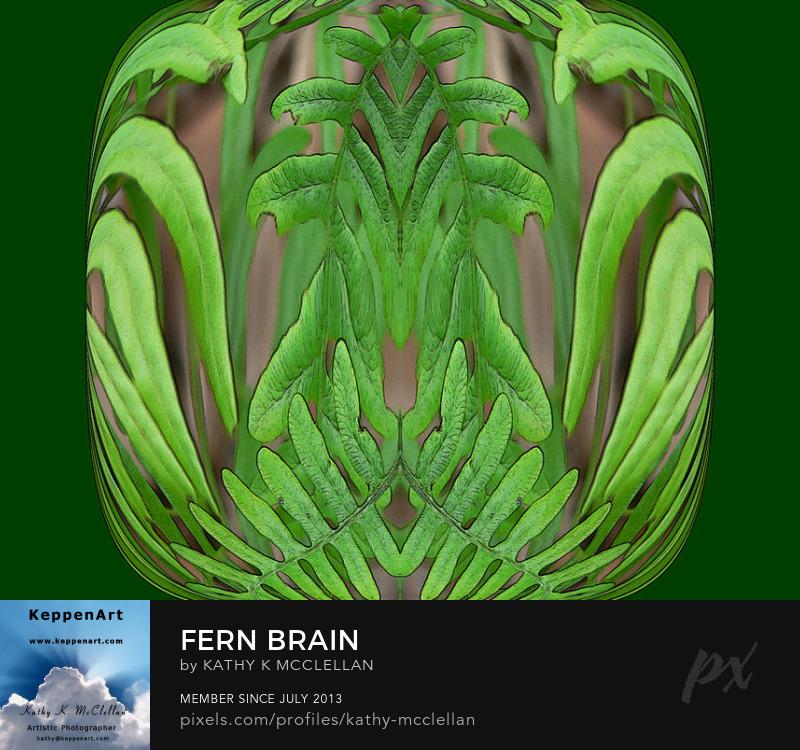 Fern Brain by Kathy K. McClellan