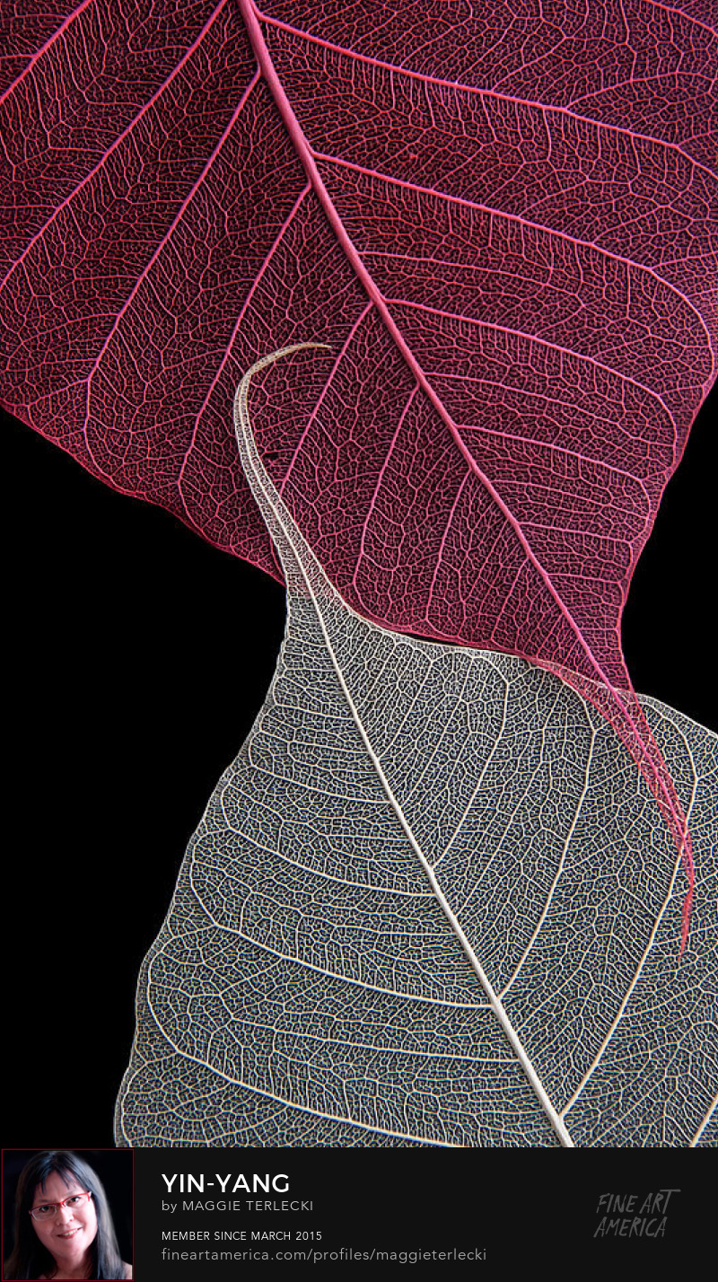 Yin Yang by Maggie Terlecki