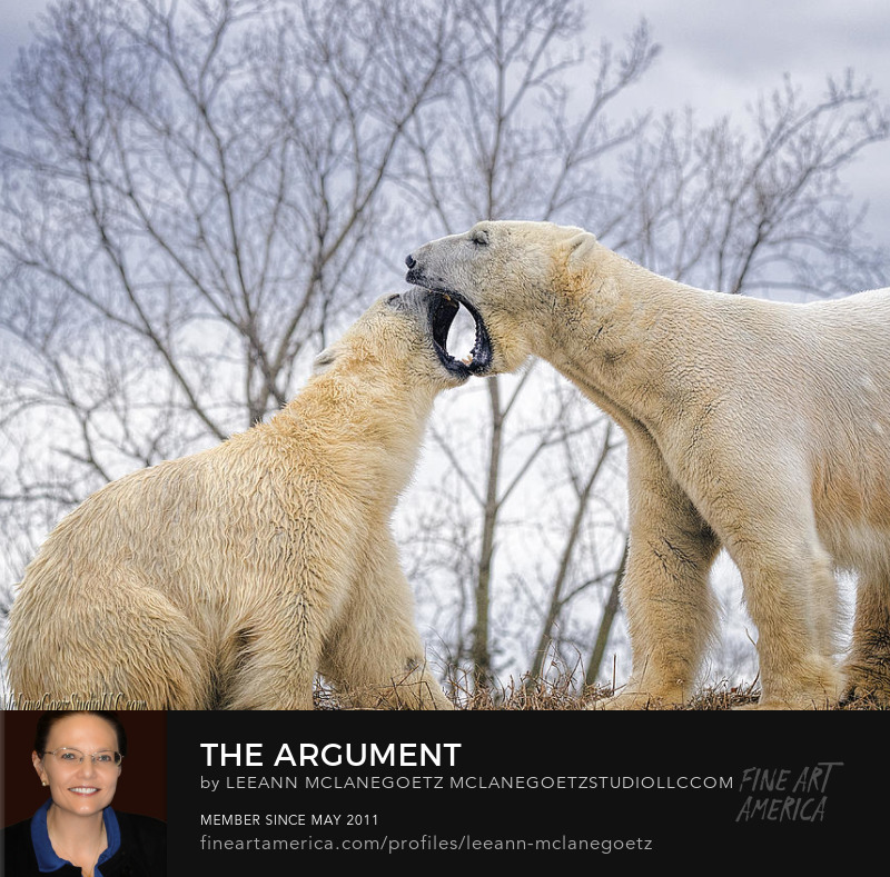 McLaneGoetzStudioLLC.com The Argument two Polar Bears Detroit Zoo