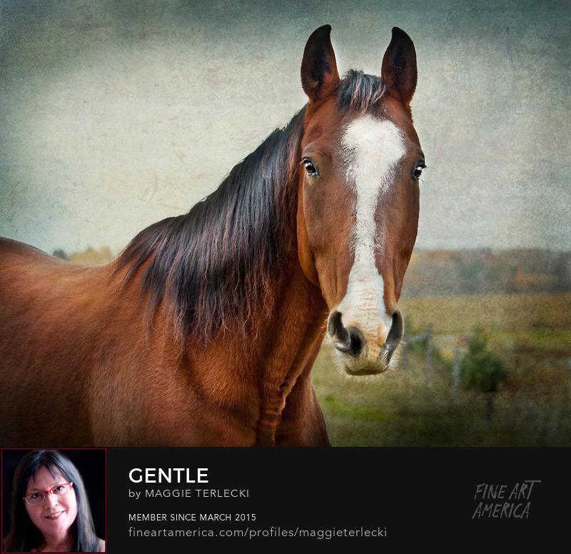 Gentle by Maggie Terlecki