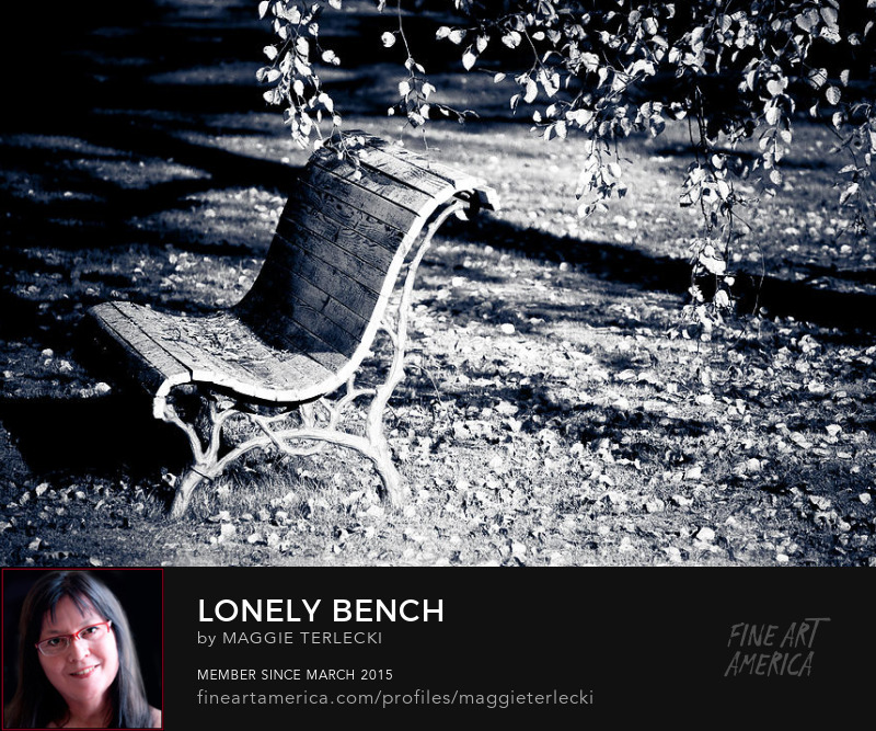 Lonely Bench by Maggie Terlecki