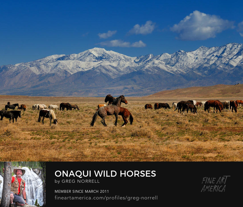 Onaqui Wild Horses from the Skull Valley of western Utah
