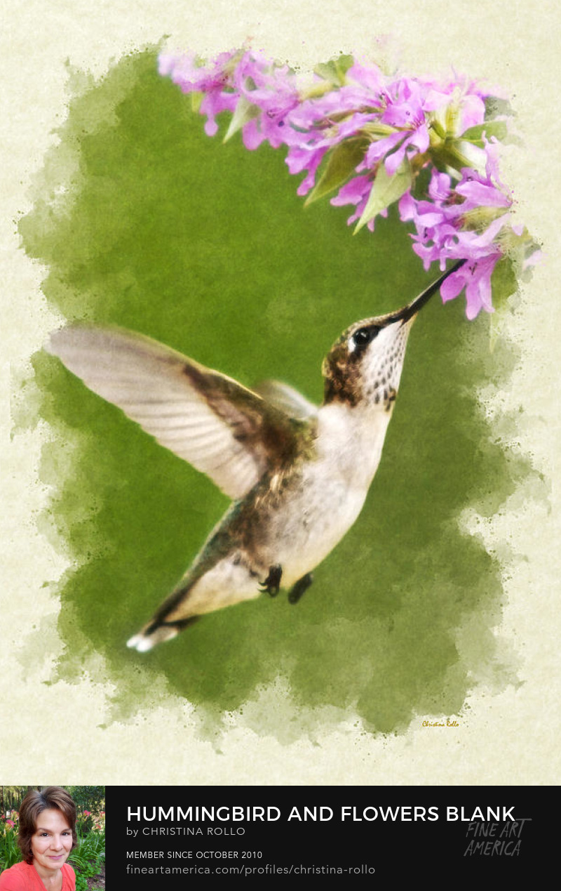 Hummingbird and Flower Note Cards for Sale