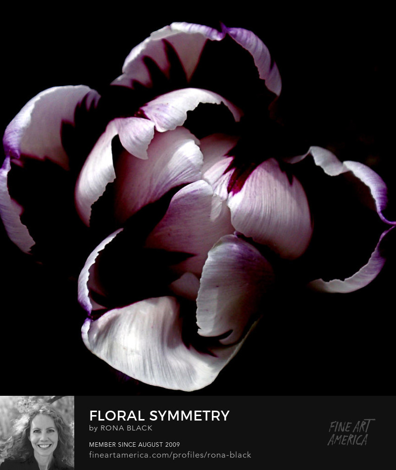 Floral Symmetry tulip art � rona black