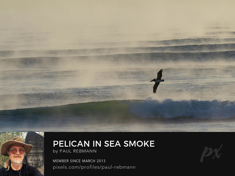 View online purchase options for Pelican In Sea Smoke by Paul Rebmann